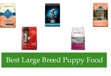 Best Large Breed Puppy Food Review